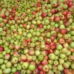10_Äpfel